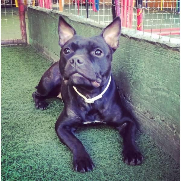 Empresa de Adestradores de Cachorro em Interlagos - Adestrador de Cãesem Pinheiros