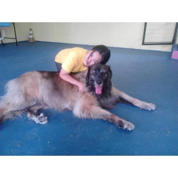Empresa de Adestradores para Cachorro em Taboão da Serra - Adestrador Canino Preço