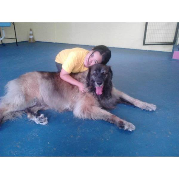 Empresa de Adestradores para Cachorro na Lapa - Adestrador de Cães Preço