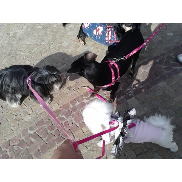 Empresa de Adestradores para Cachorro no Jardim América - Adestrador de Cãesem São Paulo