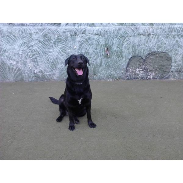 Empresa de Adestradores para Cães no Aeroporto - Adestrador de Cães Preço
