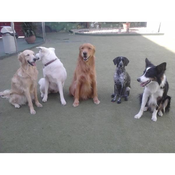 Empresa de Adestradores para Cão em Osasco - Adestrador de Cães Preço