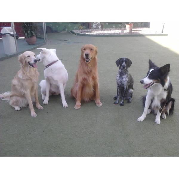 Empresa de Adestradores para Cão na Vila Andrade - Adestrador de Cãesem São Paulo