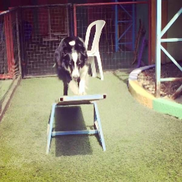 Empresa de Adestramento de Cachorro em Cotia - Adestrar Cães