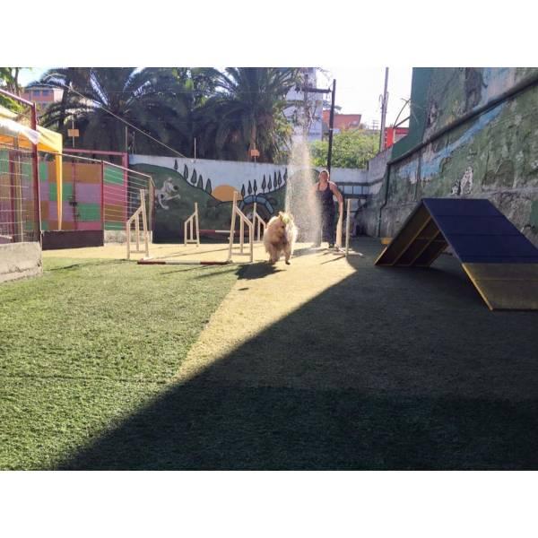 Empresa de Adestramento de Cachorros na Vila Mariana - Serviço de Adestramento de Cães