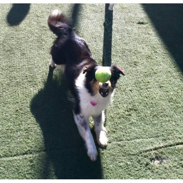 Empresa de Adestramento de Cães em Cotia - Adestrar Cães