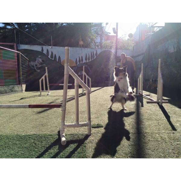 Empresa de Adestramento para Cachorro no Jardim São Luiz - Adestrar Cães