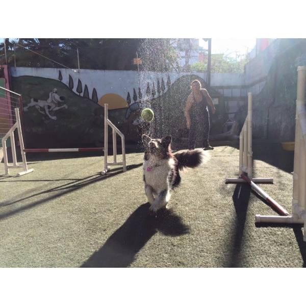 Empresa de Adestramento para Cachorros no Campo Belo - Adestramento de Cães Preço