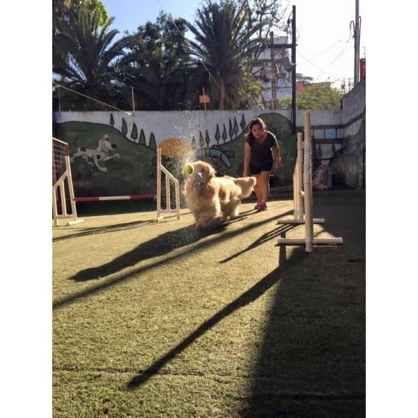 Empresa de Adestramento para Cães no Campo Belo - Adestrar Cães
