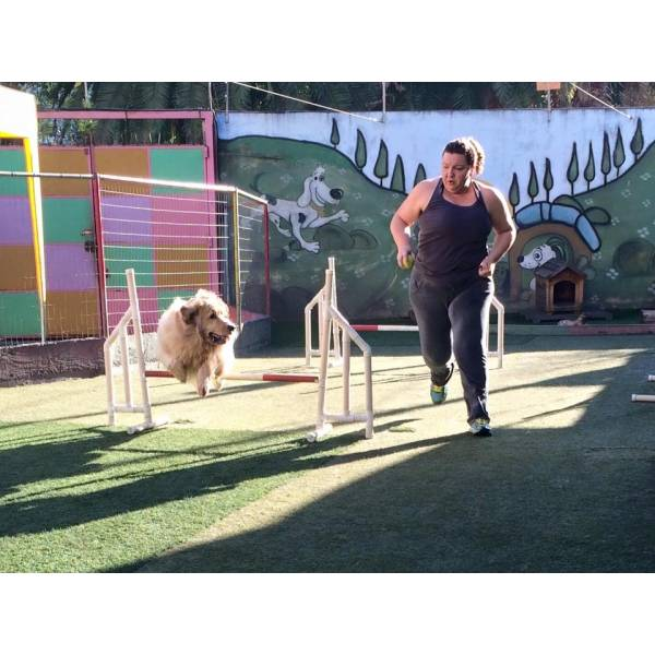 Empresa de Adestramento para Cão em São Lourenço da Serra - Adestrar Cães