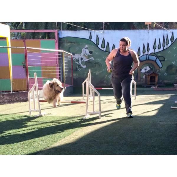 Empresa de Adestramento para Cão no Campo Limpo - Adestramento de Cães na Zona Sul