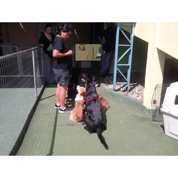 Empresas Adestradores para Cachorro no Brooklin - Adestrador de Cães Preço