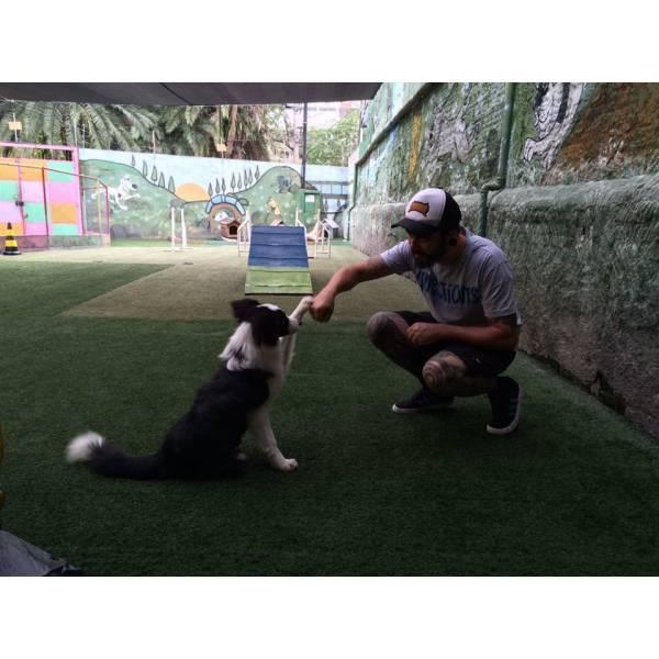Empresas de Adestrador para Cachorro no Jardim Paulistano - Empresa de Adestradores de Cães