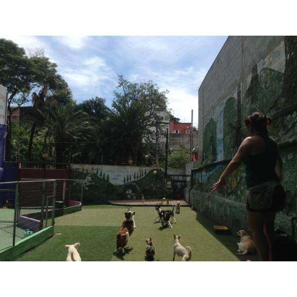 Empresas de Adestrador para Cachorros na Cidade Dutra - Adestrador de Cãesem Pinheiros