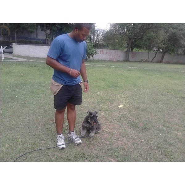 Empresas de Adestrador para Cachorros no Ibirapuera - Empresa de Adestradores de Cães