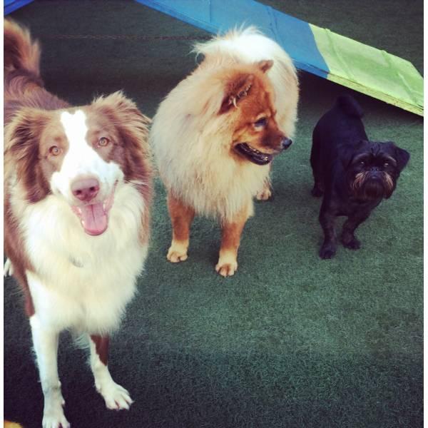 Empresas de Adestrador para Cães na Vila Leopoldina - Adestrador de Cãesem Pinheiros