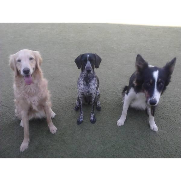 Empresas de Adestrador para Cães no Jardim Paulistano - Empresa de Adestradores de Cães