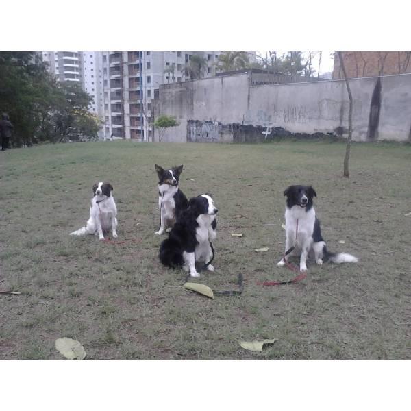 Empresas de Adestrador para Cão na Saúde - Adestrador de Cãesno Morumbi
