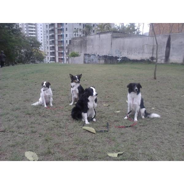 Empresas de Adestrador para Cão no Brooklin - Adestrador de Cãesem São Paulo
