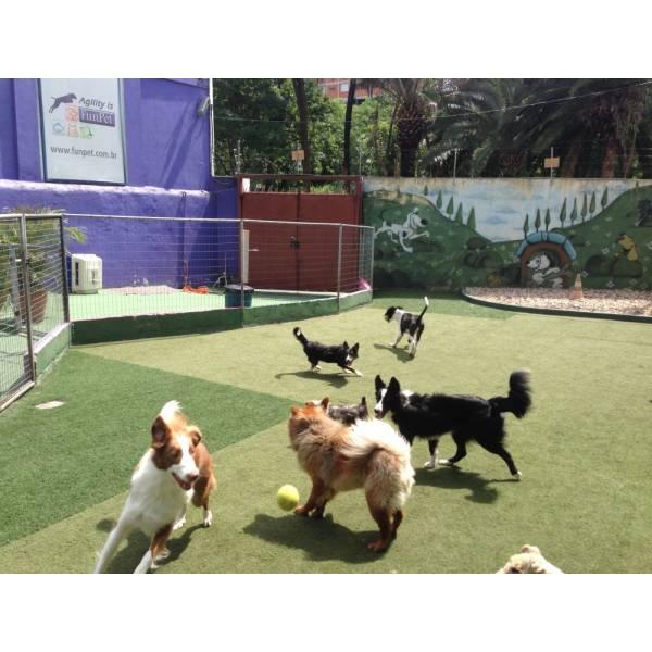 Empresas de Adestradores para Cachorro em Alphaville - Adestrador de Cãesem Pinheiros
