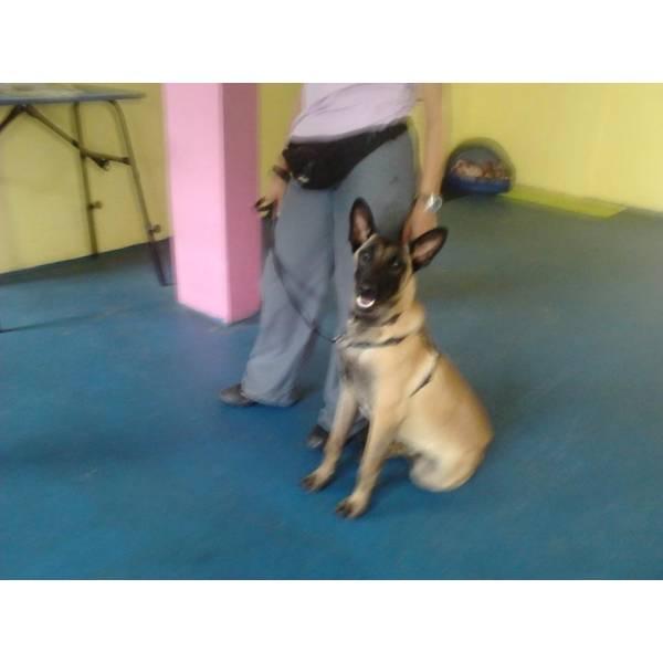 Empresas de Adestradores para Cachorro na Cidade Jardim - Adestrador Canino Preço