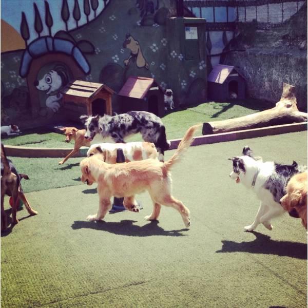 Empresas de Adestradores para Cachorro no Alto da Lapa - Adestrador de Cãesem Pinheiros