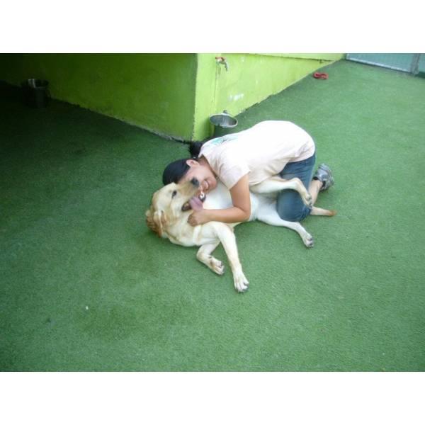 Empresas de Adestradores para Cães em Pinheiros - Adestrador Canino Preço