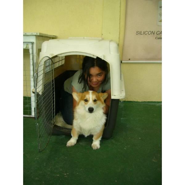 Empresas de Adestradores para Cão em Pinheiros - Adestrador de Cãesem São Paulo