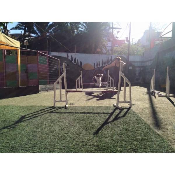 Empresas de Adestramento de Cachorro no Campo Belo - Empresa de Adestramento de Cães