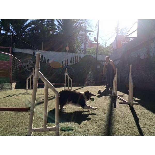 Empresas de Adestramento de Cachorros no Jardim Bonfiglioli - Adestramento Cães