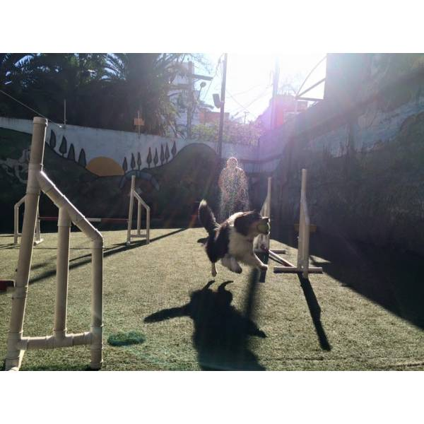 Empresas de Adestramento de Cães no Sacomã - Adestramento de Cães Preço