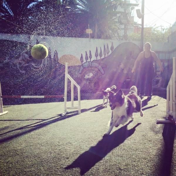 Empresas de Adestramento para Cachorro na Cidade Ademar - Adestrar Cães