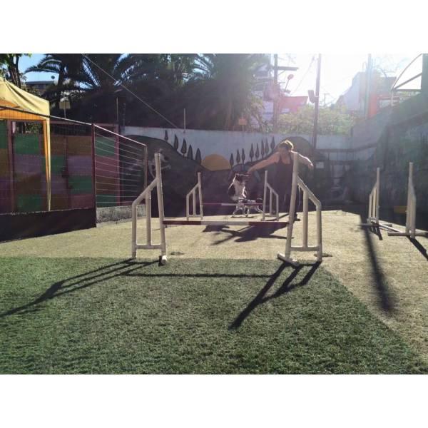 Empresas de Adestramento para Cachorros em São Lourenço da Serra - Adestramento Cães