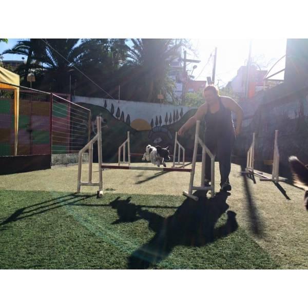 Empresas de Adestramento para Cães em Pinheiros - Serviço de Adestramento de Cães