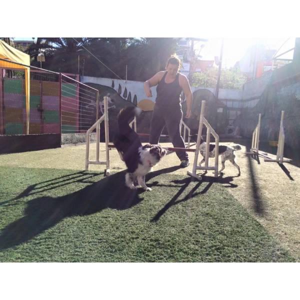 Empresas de Adestramento para Cão no Jardim São Luiz - Serviço de Adestramento