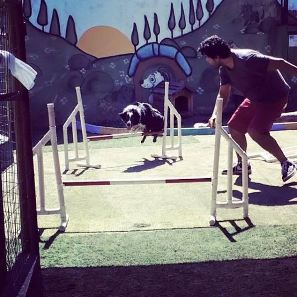 Encontrar Adestramento de Cães no Socorro - Adestramento Cães
