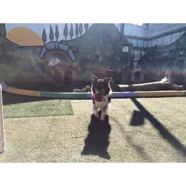 Encontrar Adestramento de Cão em Osasco - Adestramento Cães