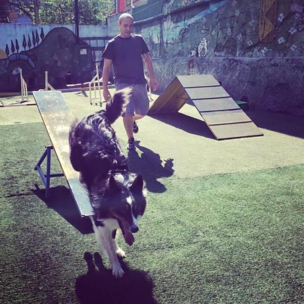Encontrar Adestramento para Cachorro em Carapicuíba - Adestramento Cães
