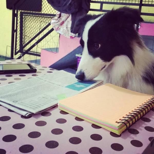 Encontrar Adestramento para Cachorros no Butantã - Adestramento Cães