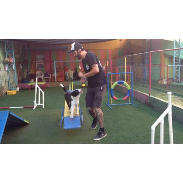 Fazer Adestramento de Cachorrinhos em Santana de Parnaíba - Adestramento de Cães na Vila Olímpia