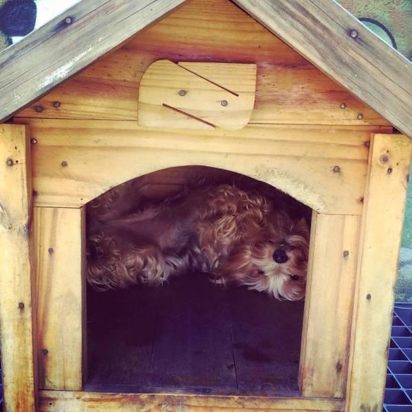 Hospedagem para Animais no Morumbi - Hotel para Animal