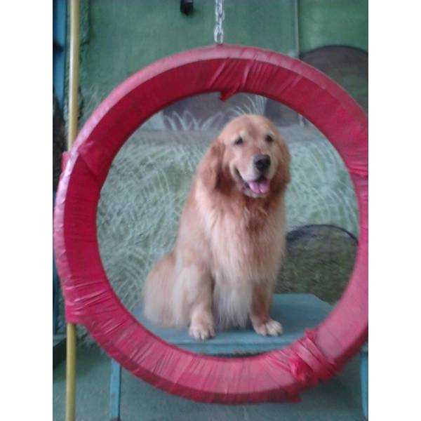 Onde Achar Adestrador para Cachorro em Santo Amaro - Adestrador de Cãesno Morumbi