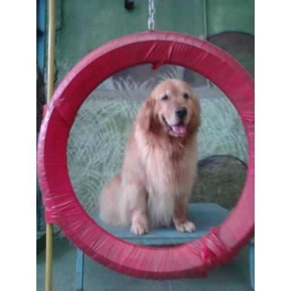 Onde Achar Adestrador para Cachorro no Jardim São Luiz - Adestrador de Cães