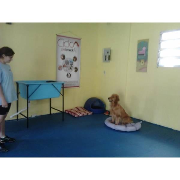 Onde Achar Adestrador para Cachorros no Pacaembu - Adestrador de Cachorro