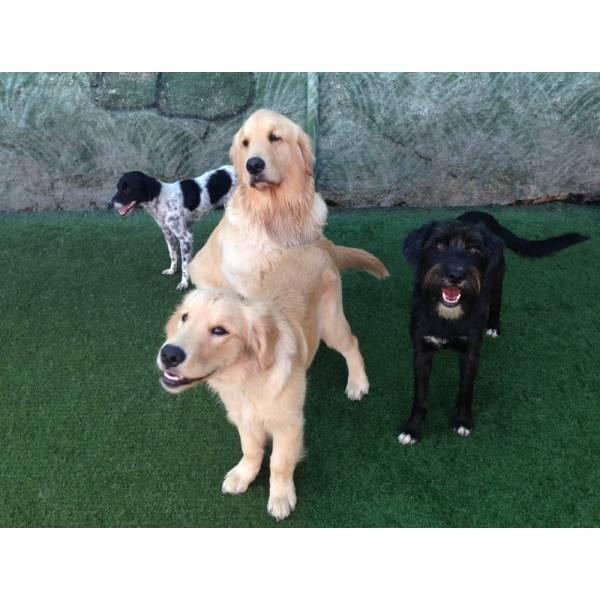 Onde Achar Adestrador para Cachorros no Rio Pequeno - Adestrador de Cãesna Vila Olímpia