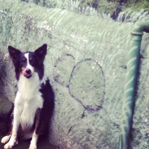 Onde Achar Adestrador para Cães na Vila Mariana - Adestrador de Cãesno Itaim Bibi