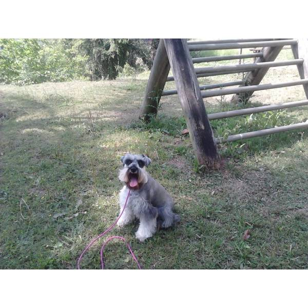 Onde Achar Adestrador para Cães no Campo Belo - Adestrador Profissional de Cães