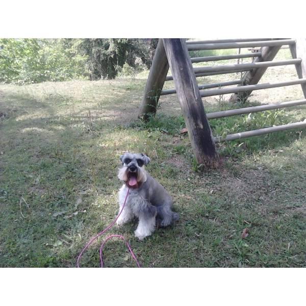 Onde Achar Adestrador para Cães no Jardim Bonfiglioli - Serviço de Adestrador de Cachorro