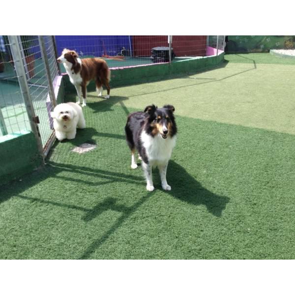 Onde Achar Adestrador para Cão em Cajamar - Adestrador de Cãesno Itaim Bibi