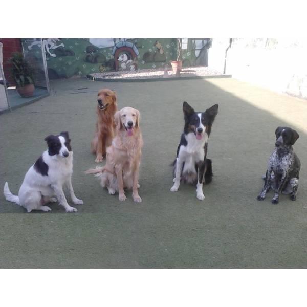 Onde Achar Adestrador para Cão no Pacaembu - Adestradores de Cães